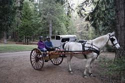1 Horse Cart Seat-image.jpg