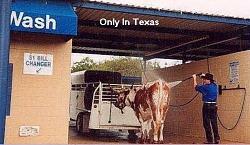 Cow cleaner GIF-cow-wash.jpgs.jpg