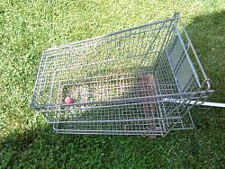 FOX  TRAP TO  PROTECT   FOR  YOUR   COOP  DURING  THE   NIGHT.-img_20180603_162952.jpg