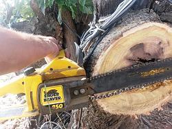 Help me choose a chainsaw-20180910_111541.jpgaa.jpg