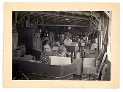 Vintage work crew photos-muskgrave_pencil_company_wwii.jpg