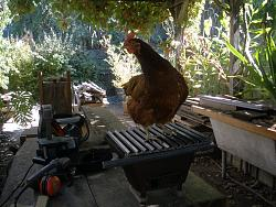 wood stove log grate-2011-09-27_chicken_on_bbq.jpg