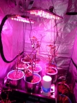 LED Growing Lights